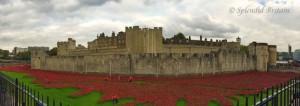 Tower of London gedenkt den 1. Weltkrieg mit 888.246 Keramik Mohnblumen